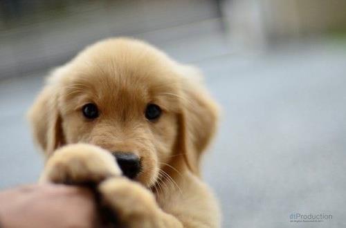 adorable 3